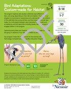 Bird Adaptations: Custom-made for Habitat