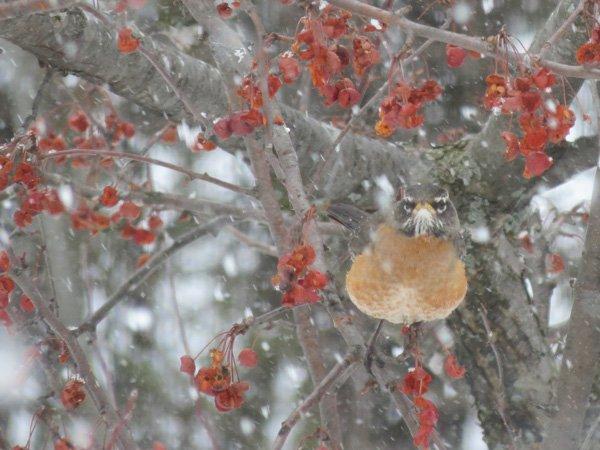 Activité familiale- Trouver de la nourriture en hiver