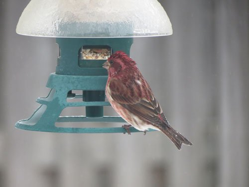 Les oiseaux avant l'hiver