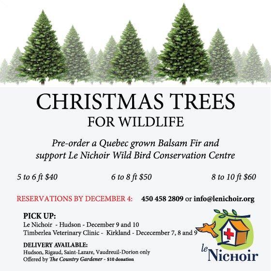 Christmas Tree Sale 2017