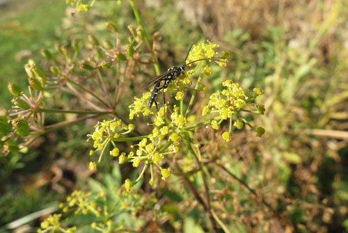 Délicieux insectes - 7 juillet au Nichoir