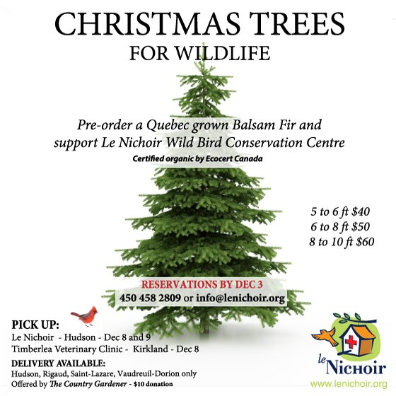 Christmas Trees for Wildlife