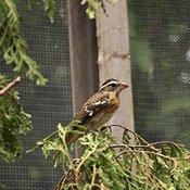 Les oiseaux au Nichoir