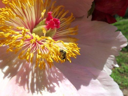 Pollinisateurs