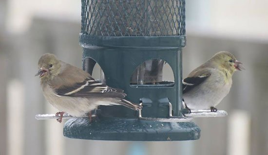 Feeding birds - September 17, September 19 and October 8