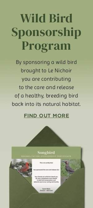 Rehabilitate a bird sponsorship