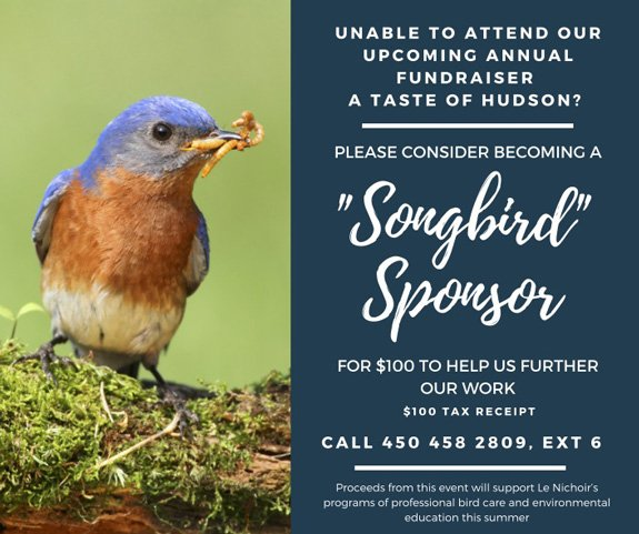 Taste of Hudson Songbird Sponsorship