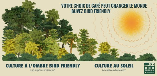 Buvez Bird Friendly